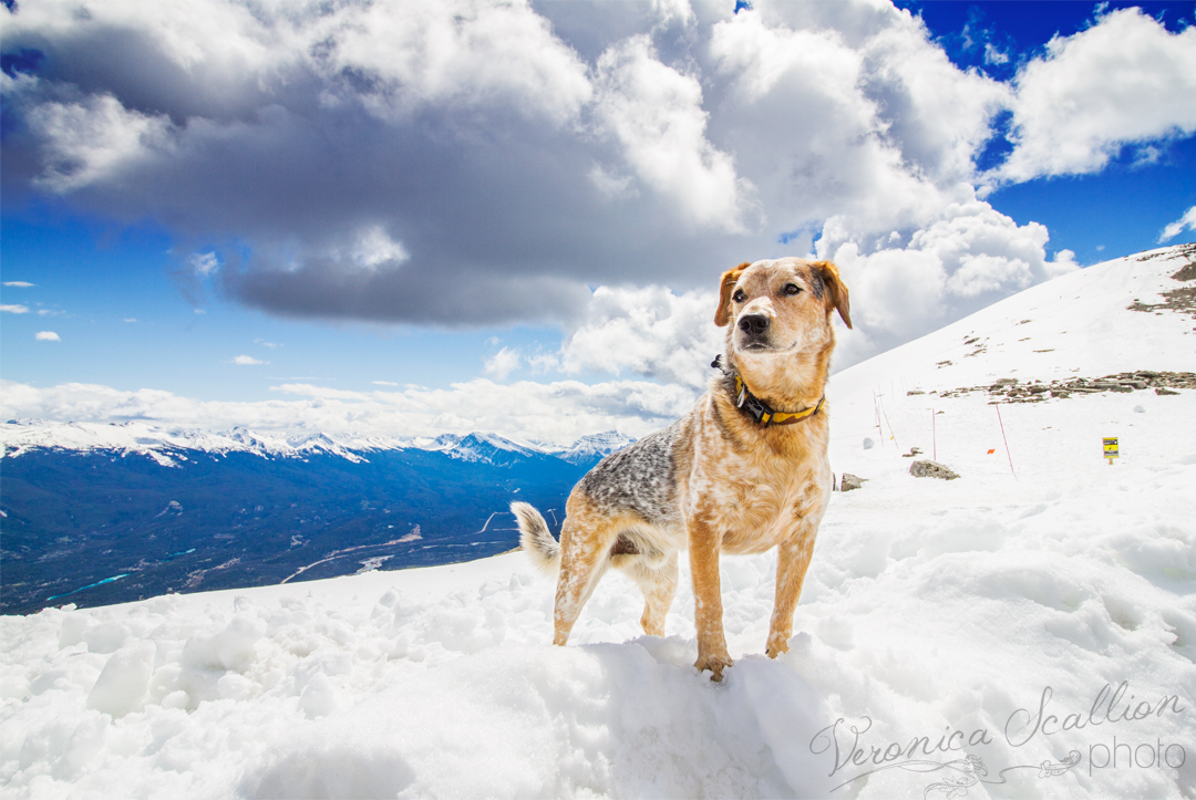 jasper-dog